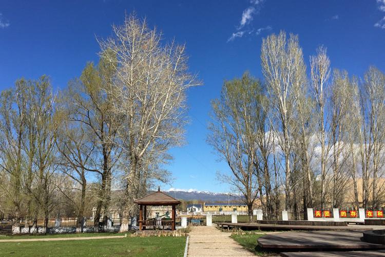 新疆冬天雪地白杨树风景